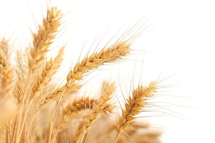 Pšenica má mnoho využití